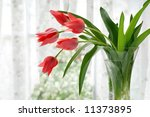 Vase of coral tulips next to a window with voile curtains.  Springtime blossoms in soft focus in the background.  Shallow dof. - stock photo