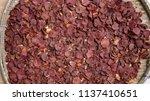 betel nut or areca nut is... | Shutterstock . vector #1137410651