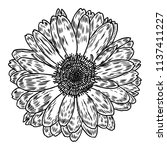 daisy in line art style ... | Shutterstock .eps vector #1137411227