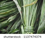 green vetiver leaves | Shutterstock . vector #1137474374