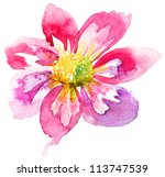 Beautiful Pink Flower ...