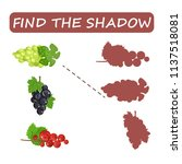 find the right shade of fruit.... | Shutterstock .eps vector #1137518081
