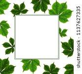 vector contour color green... | Shutterstock .eps vector #1137627335