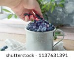 honeysuckle berry in metal cup... | Shutterstock . vector #1137631391