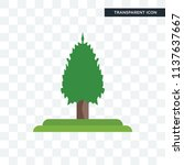 balsam fir tree vector icon... | Shutterstock .eps vector #1137637667