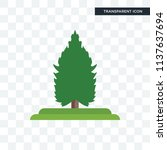spruce tree vector icon... | Shutterstock .eps vector #1137637694
