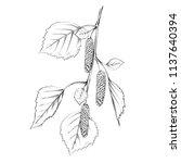 birch branch sketch   Shutterstock .eps vector #1137640394