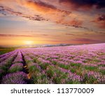 meadow of lavender. nature... | Shutterstock . vector #113770009