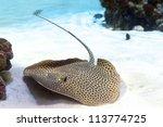 A Stingray