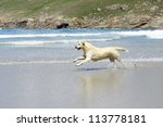 happy dog running on the beach - stock photo
