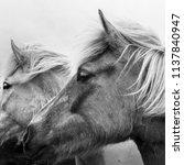 monochrome portrait of two... | Shutterstock . vector #1137840947
