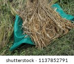 luang prabang   lao pdr   june... | Shutterstock . vector #1137852791
