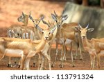 a group of deer | Shutterstock . vector #113791324