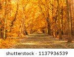 autumn forest on sunset. | Shutterstock . vector #1137936539