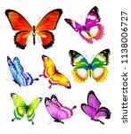 Stock vector beautiful color butterflies set isolated on a white 1138006727
