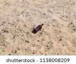 an empty bottle of beer is... | Shutterstock . vector #1138008209