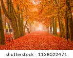 nice trees in autumn at lake... | Shutterstock . vector #1138022471