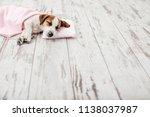sleeping puppy on small pillow. ... | Shutterstock . vector #1138037987