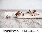 two dogs sleeping on floor.... | Shutterstock . vector #1138038014