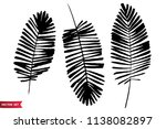 vector set of ink drawing palm... | Shutterstock .eps vector #1138082897