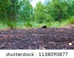 soumarske raseliniste  moor  ...   Shutterstock . vector #1138090877