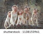 monkeys sit in groups and look...   Shutterstock . vector #1138153961