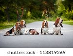 Group Of Dogs Basset Hound...