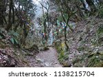 rocky steps in the forest with... | Shutterstock . vector #1138215704