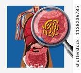 human with intestinal flora... | Shutterstock .eps vector #1138236785