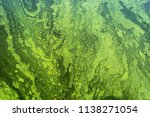 Green Algae On The Surface Of...