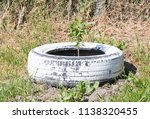 homemade flowerbed from a tire  ...   Shutterstock . vector #1138320455