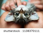 Cute Little Kitten Lying Upsid...