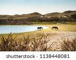 two wild konik horses in the...   Shutterstock . vector #1138448081