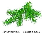green branch pine tree isolated ... | Shutterstock .eps vector #1138555217