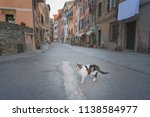 Cat On The Street   A Cat In A...