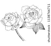 peony flower in a vector style... | Shutterstock .eps vector #1138766711