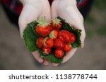 strawberries in hands | Shutterstock . vector #1138778744