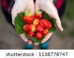 strawberries in hands | Shutterstock . vector #1138778747
