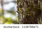 forest songbird on a branch.... | Shutterstock . vector #1138788671