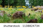 A Patch Of Forest Dominated By...