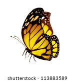 Yellow Butterfly   Isolated On...