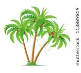 three cartoon coconut palms. ... | Shutterstock .eps vector #113889859