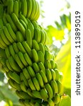 Canarian Banana Plantation...