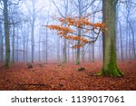 autumn forest with bright... | Shutterstock . vector #1139017061