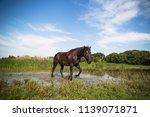 horse galloping through lake... | Shutterstock . vector #1139071871