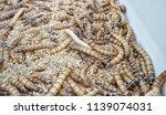 meal worms for pet bird  animal ... | Shutterstock . vector #1139074031