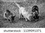 street cats eating  detail of... | Shutterstock . vector #1139091371