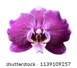 orchid isolated on white... | Shutterstock . vector #1139109257