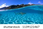 over under sea surface sharks... | Shutterstock . vector #1139121467