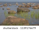 stones and rush on the see... | Shutterstock . vector #1139176679